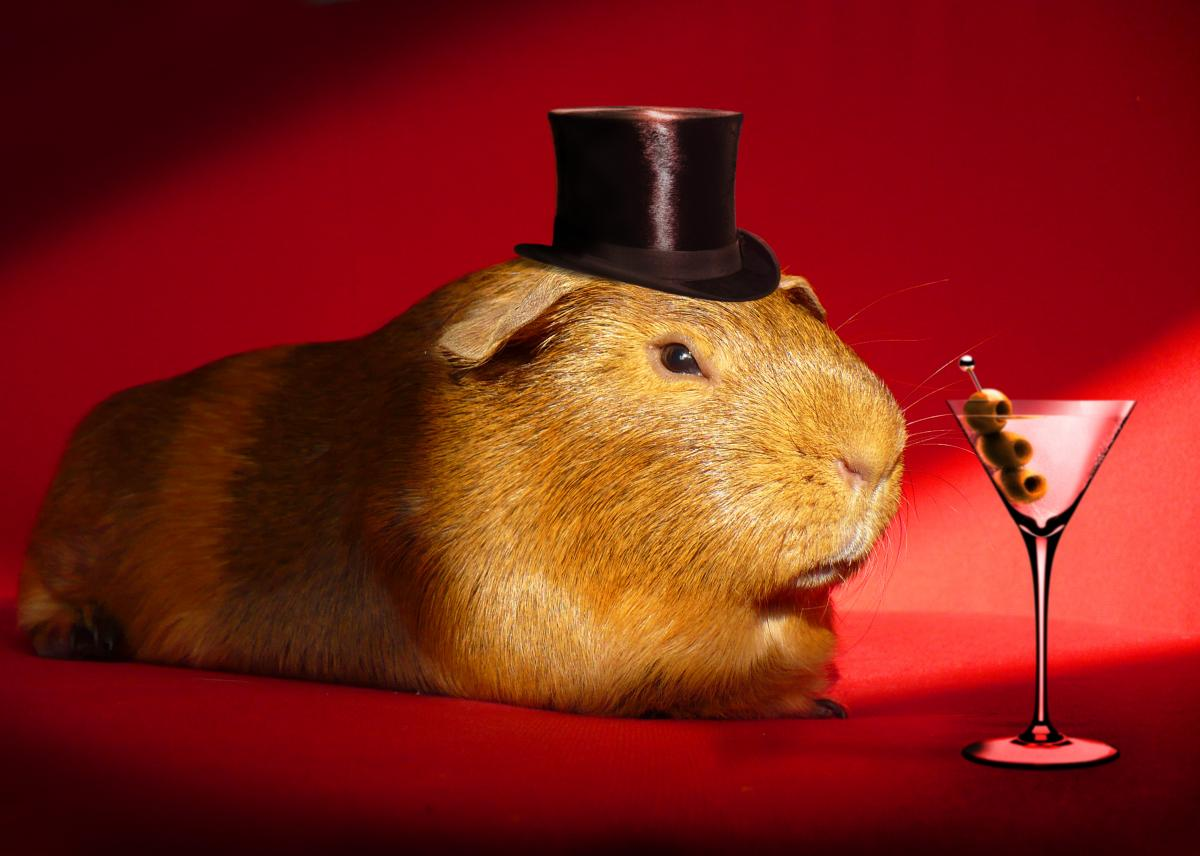 Front page image guinea pig with top hat