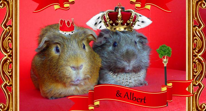 Two royal guinea pigs