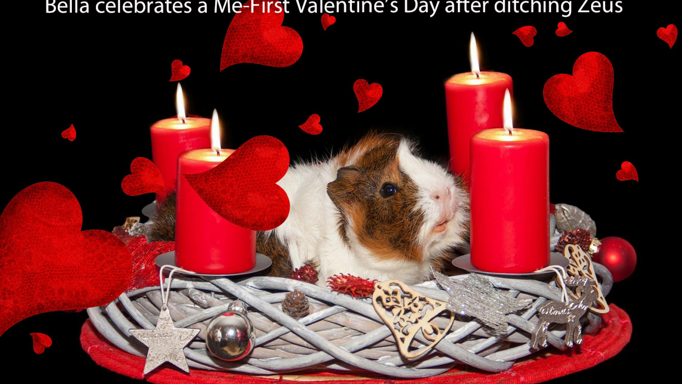 guinea pig with red  hearts and candles